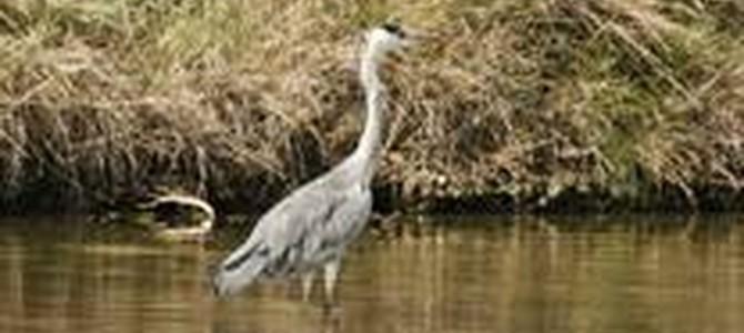 Balade pédestre sur le thème des oiseaux
